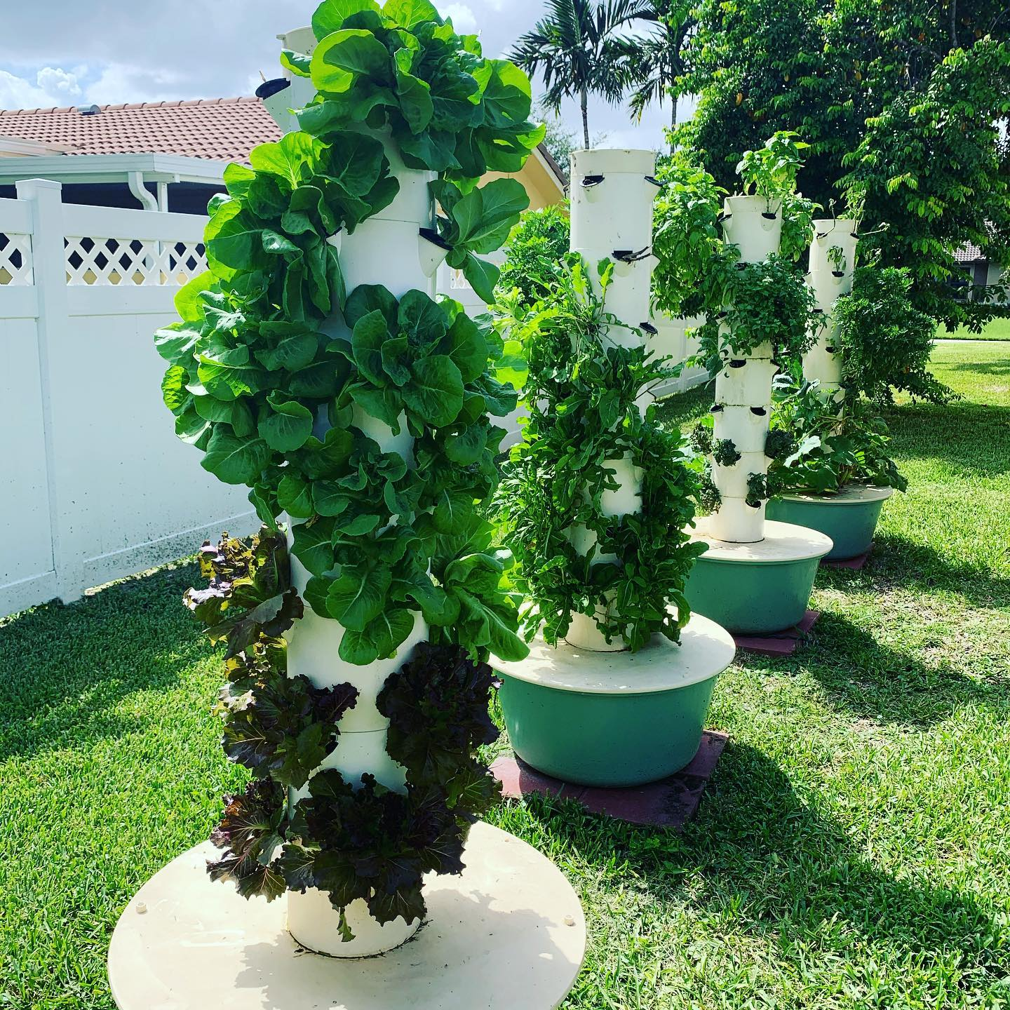 TOWER GARDEN – What I'm Growing in summer 2020